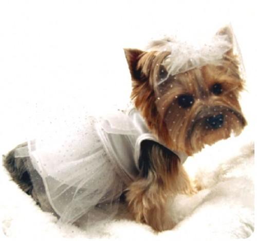 abito sposa cane.jpg
