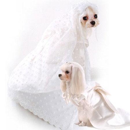 abiti da sposa per cani.JPG