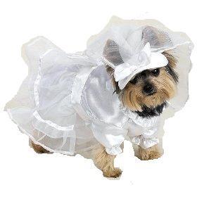 vestito sposa cane.jpg
