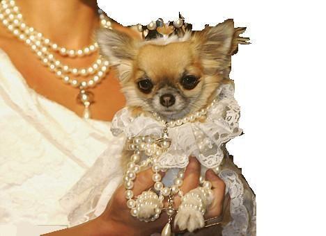 sposa vestito con cane.jpg